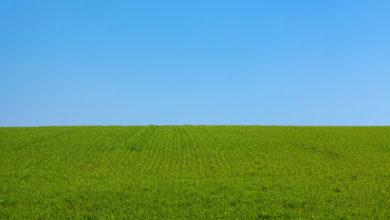 Photo of Med en gressklipper vil det bli en enkel oppgave å klippe gresset i hagen
